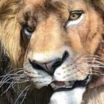 Mufasa onthuld uit Disney's live action remake van The Lion King