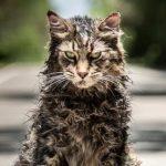 Eerste trailer Stephen King verfilming Pet Sematary