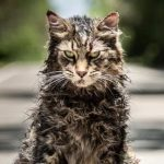 Nieuwe poster Stephen King verfilming Pet Sematary