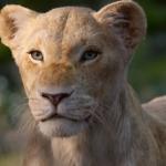 Luister naar Beyoncé & Donald Glover's duet in nieuwe The Lion King tv-spot