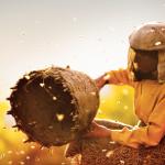 Prijswinnende documentaire Honeyland vanaf 9 januari te zien