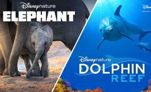 Elephant en Dolphin Reef