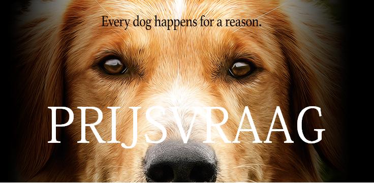 Prijsvraag A Dog's Purpose – Beëindigd