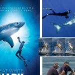Great White Shark met verteller Derek de Lint vanaf 24 april in Omniversum