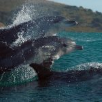 America's Music en BBC's Oceans, Our Blue Planet vanaf 3 juli in Omniversum