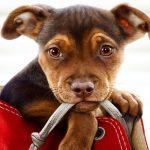 Trailer voor Sony's A Dog's Way Home