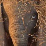 Nieuwe trailer voor Disney's live-action Dumbo