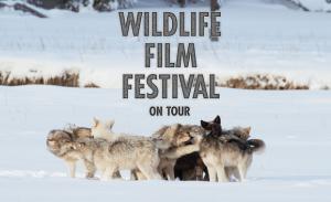 Wildlife Film Festival On Tour