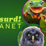 Absurd Planet is vanaf 22 april 2020 te zien op Netflix