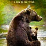 Growing Up Animal vanaf 18 augustus op Disney Plus